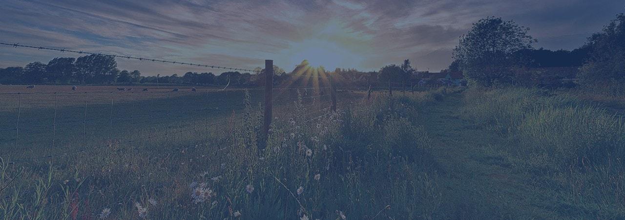 Beautiful field at sunset